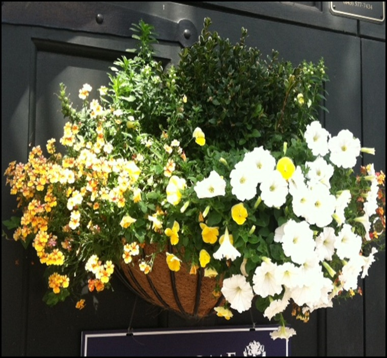 window box 2