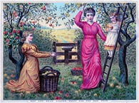 apple harvest vintage image graphicsfairy10