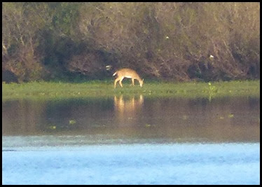 03 - deer across the lake