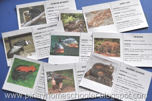 Animals of South America FREE Printable
