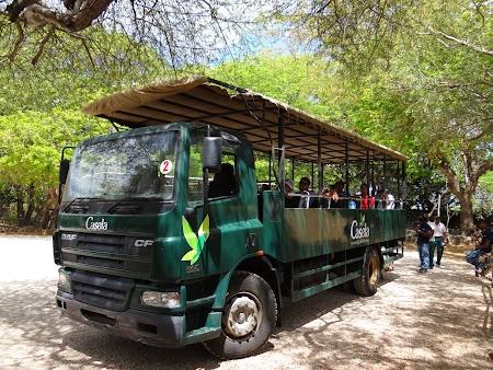 Photo safari bus