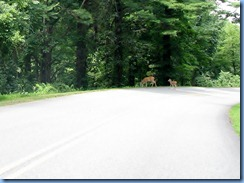 0955 Virginia - Blue Ridge Parkway North - white-tailed doe & 1 fawn