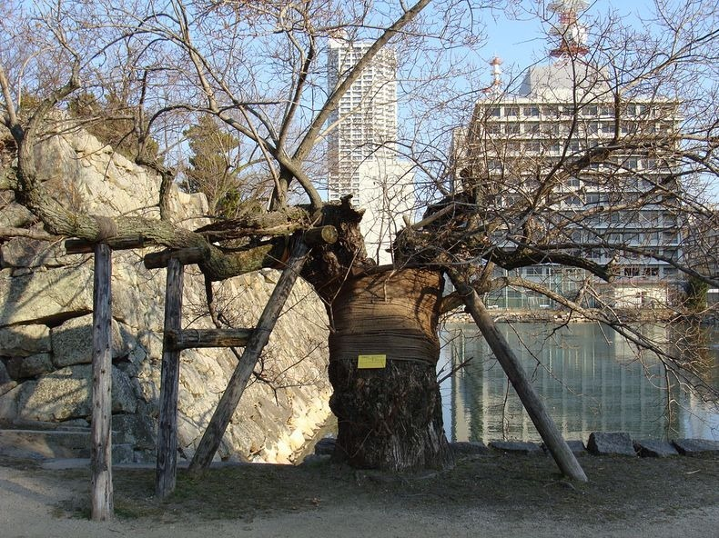 a-bombed-trees-5