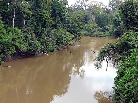 Vers Ankasa : La Tanoé à Fawmang. Ghana, 22 décembre 2009. Photo : J. F. Christensen