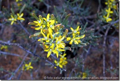 4387 La Solana-Cortadores-El Sao(Orijama)