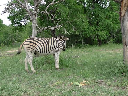 Safari Africa de Sud