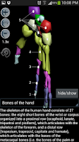 Screenshot of Human bones lite