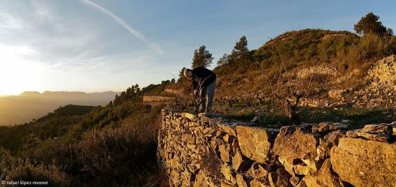 Poda de vinyes velles a la serra de la Figuera.Jaume Roca, Celler Ficària Vins, DO Montsant.La Figuera, Priorat, Tarragona