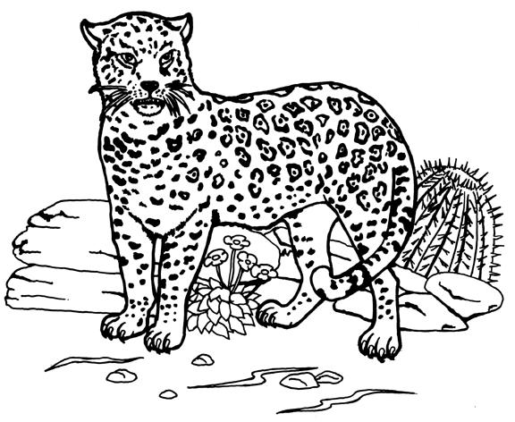 Jaguar Colorear Dibujos