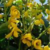 Arbusto de flores amarillas