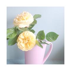Peach-Tea-Mug