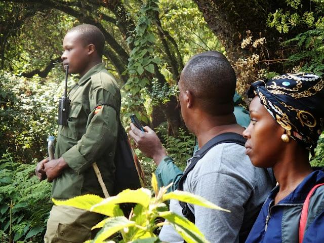 Gorilla Tracking 092.JPG