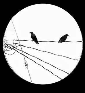 crows-on-the-wire