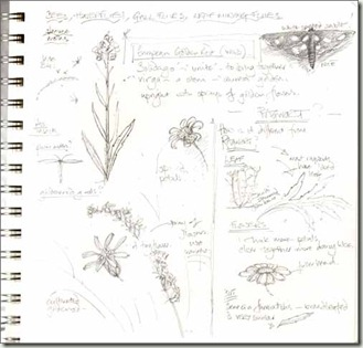 goldenrod notes bg