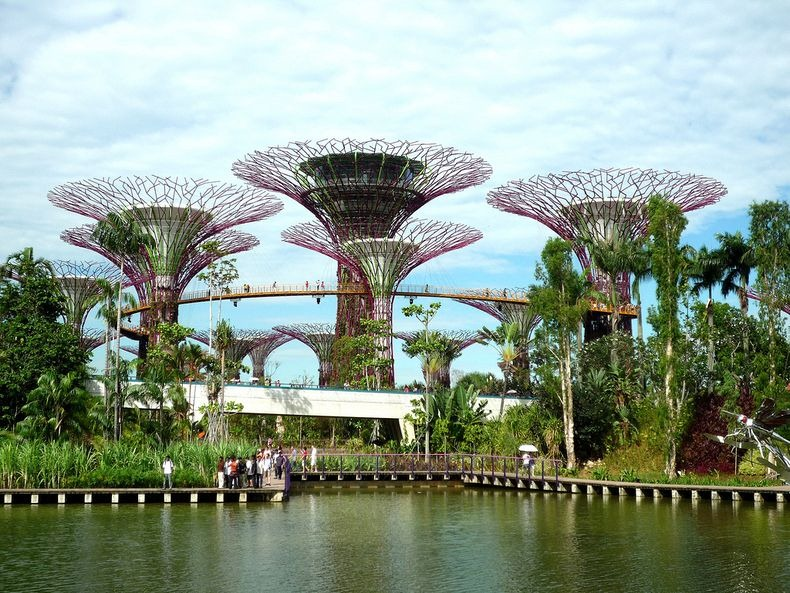 supertrees-singapore-9