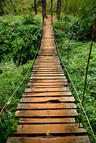One of the Many Bridges along Baguio's Eco Trail