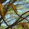 Aloe Growth