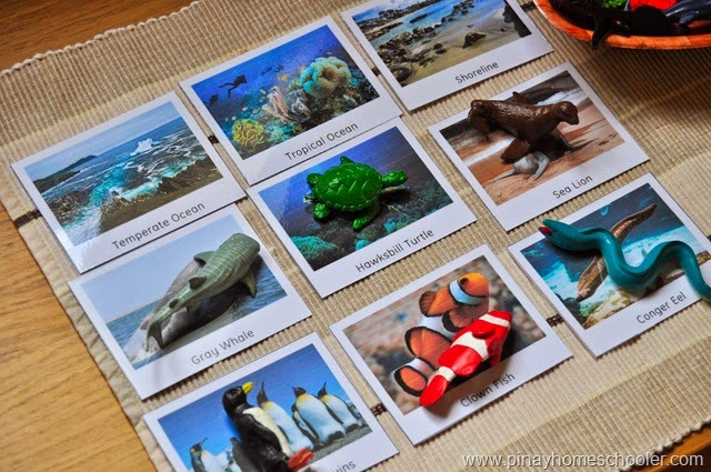 FREE Animals in the Marine Ecosystem Cards