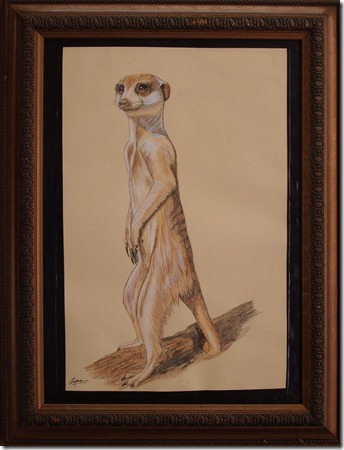 tracey snyman meercat sentry