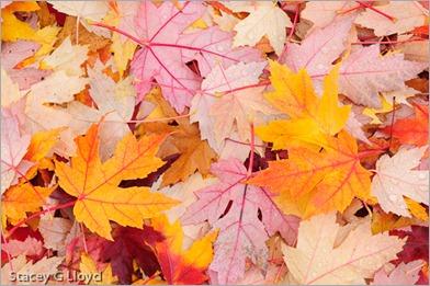 Blog_20111114_1-8