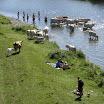 Kühe queren die Ruhr