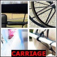 CARRIAGE- Whats The Word Answers