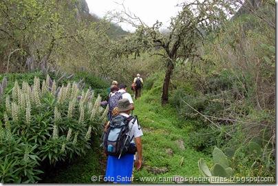5310 La Pasadera-Roque Carnero