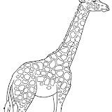 girafa.jpg