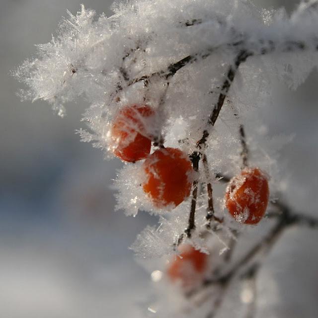 Frutainvierno - McDuck.jpg