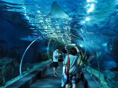 Ocean World - acvariul din Bangkok.