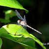 Drogonfly