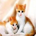 صور قطط جميله icon