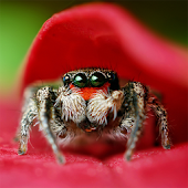 Cute Spiders Wallpapers