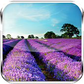 Lavender HD Live Wallpaper