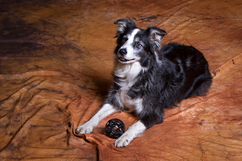 Jess by Miroslav Socha - Animals - Dogs Portraits