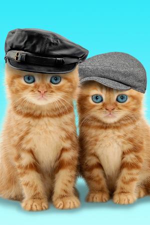 Talking Cats 1.2.0 screenshot 322629