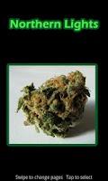 Screenshot of Virtual Weed Smoking PRO