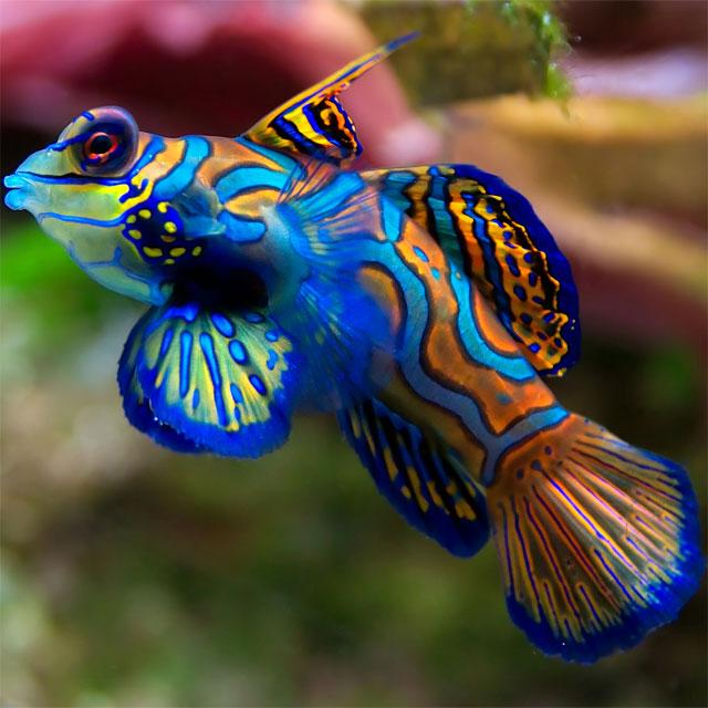 Fish Jigsaw Puzzles - screenshot