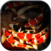 Fish Pond - 3D Koi LWP