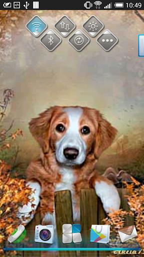 Dog cute live wallpaper