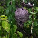 Wasp (nest)