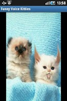 Screenshot of Funny Voice Kittens