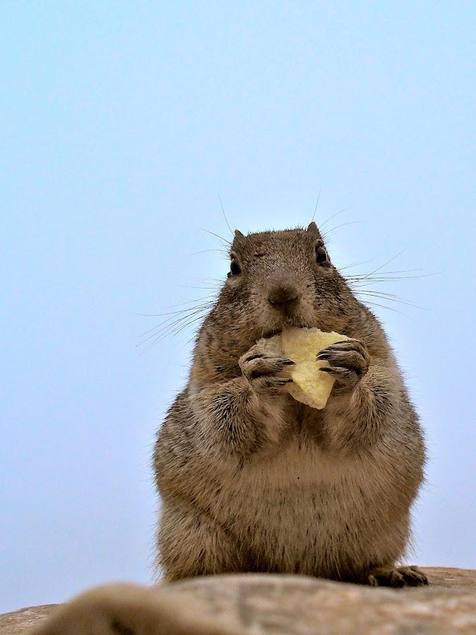 Potato Chipmunk by Ash Swetland - Animals Other ( chip, wild, furry, fuzzy, chipmunk, potato, squirrel )