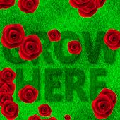 Rose Garden LWP Lite