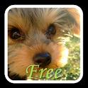 YorkieWall FREE -LiveWallpaper icon