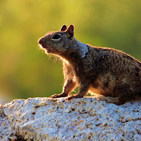 Acorny squirrel pose by Brendan Mcmenamy - Novices Only Wildlife ( pose, sneeze, sun, squirrel, acorn )
