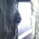 Chimney swift (nest)