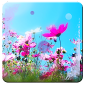 Summer n Flowers HD Wallpaper