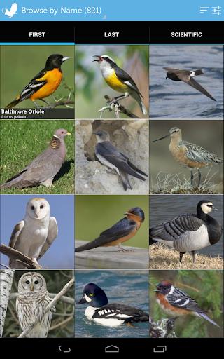 玩免費書籍APP|下載Audubon Birds of North America app不用錢|硬是要APP