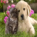 Cat and dog Wallpapers HD icon